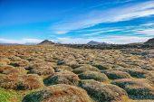 Frozen Lavas Field In The Geothermal Valley Leirhnjukur, Near Krafla Volcano. Location: Valley Leirh poster