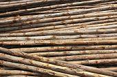Eucalyptuses wood stack