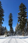 Typical winter scenery from The National Park Sumava. Czech republic, Europe.