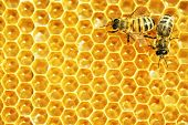 image of hexagon pattern  - Working bees on honey cells - JPG
