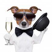 stock photo of dog birthday  - cheers dog with a glass of champagne and a black hat - JPG