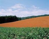 Crop Hills On Plains poster