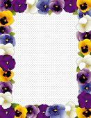 Pansy Flower Frame, Polka Dot Background