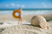 small nautilus shell  on beach against blue sea , shallow dof
