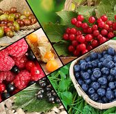Fresh berries collage