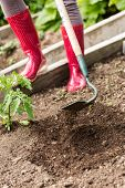 stock photo of hoe  - Woman wearing red rubber boots working with a hoe in the garden - JPG