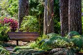 A Beautiful Secluded Quiet Park Bench in a Garden