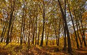 AutumnSunshine