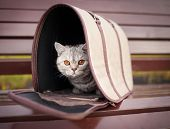 cat in pet carrier on a park bench