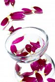 A glass bowl with purple flower on white background