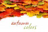Colorful Leaf Border