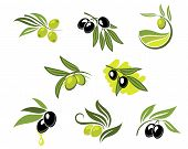 picture of virgin  - Green and black olives set for agriculture or food design - JPG