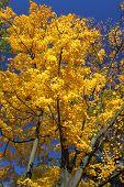 Autumn In Trees