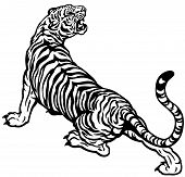 pic of tigress  - aggressive tiger black and white isolated illustration - JPG