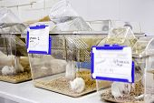 picture of caged  - cages with white mouse in the biology laboratory - JPG