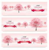 image of sakura  - Three spring banners with blossoming sakura trees - JPG