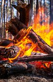 stock photo of pain-tree  - Bonfire in the fores - JPG