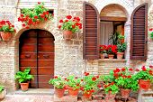 pic of geranium  - Italian house front with colorful potted flowers