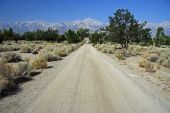Road Through Manzanar