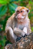Monkey (macaque) On A Tree