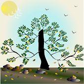 Vector stylized autumn tree - Illustration