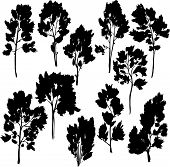 set of different trees with leaves