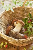 Fresh mushrooms and cranberry in basket