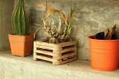 Potted Plants For Home Decoration Modern Style