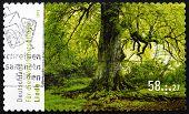 Postage Stamp Germany 2013 Lime Tree, Flowering Tree
