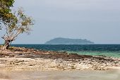 View of the island with a rocky shore with a tree. Phuket