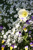 Wild Flowers in Grand Teton National Park