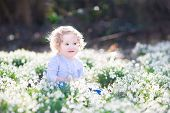 Adorable Curly Toddler Girl Playing With First Spring Flowers In A Beautiful Sunny Park