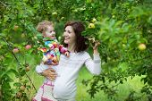 Attractive Young Pregnant Woman Holding Her Baby Daughter Under A Beautiful Apple Tree