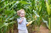 Beautiful Curly Baby Girl Eating Corn In A Field