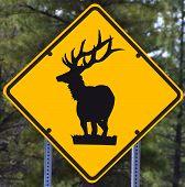 road sign - deer crossing, black on yellow