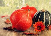 Colorful Pumpkins On  Natural Background
