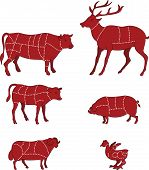 picture of deer meat  - vector illustration of Diagram Guide for Cutting Meat - JPG