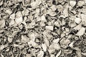 Dry Leaves Of Beige Color Lie On Earth