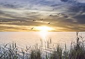 stock photo of sea oats  - sunrise at sea from the shore of plants - JPG
