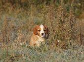 Amazing Puppy Of Nova Scotia In Soft Rime