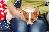 Woman sitting on sofa with cute dog, close-up
