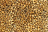 foto of leopard  - texture of close up print fabric striped leopard for background - JPG