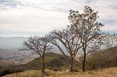 Monte Alban Oaxaca Small Trees Above Oaxaca Valley
