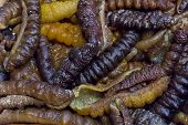 picture of larva  - Dried edible insect larva at a market in Chinatown NY - JPG