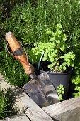 picture of trowel  - stainless steel garden trowel in a herb garden in Ireland - JPG