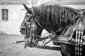 Horses Of Wedding Carriage