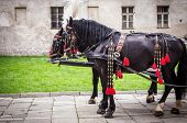 foto of carriage horse  - Horses of wedding carriage in Cracow ( Krakow ) Poland