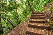 Steps On A Steep Hillside In Forest Area
