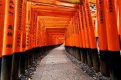 pic of inari  - Red Tori Gate at Fushimi Inari Shrine in Kyoto - JPG