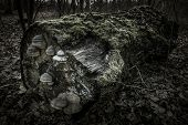 image of backwoods  - Lying tree trunk covered with moss and mushrooms in a dark forest - JPG